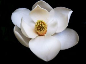 Click here for Magnolia Databases website